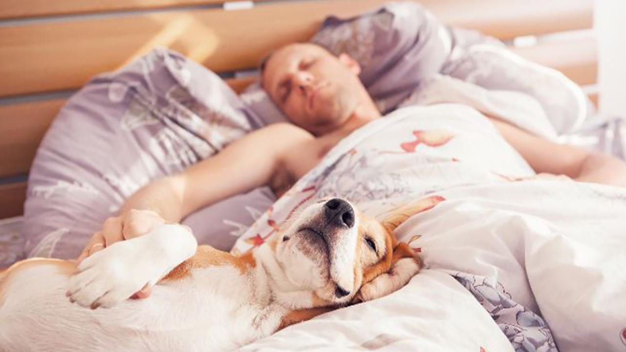 Schlaflos Nächte Erholsam Partner Schnarcht