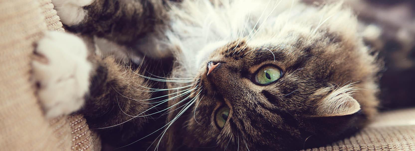 Katzen, kratzen