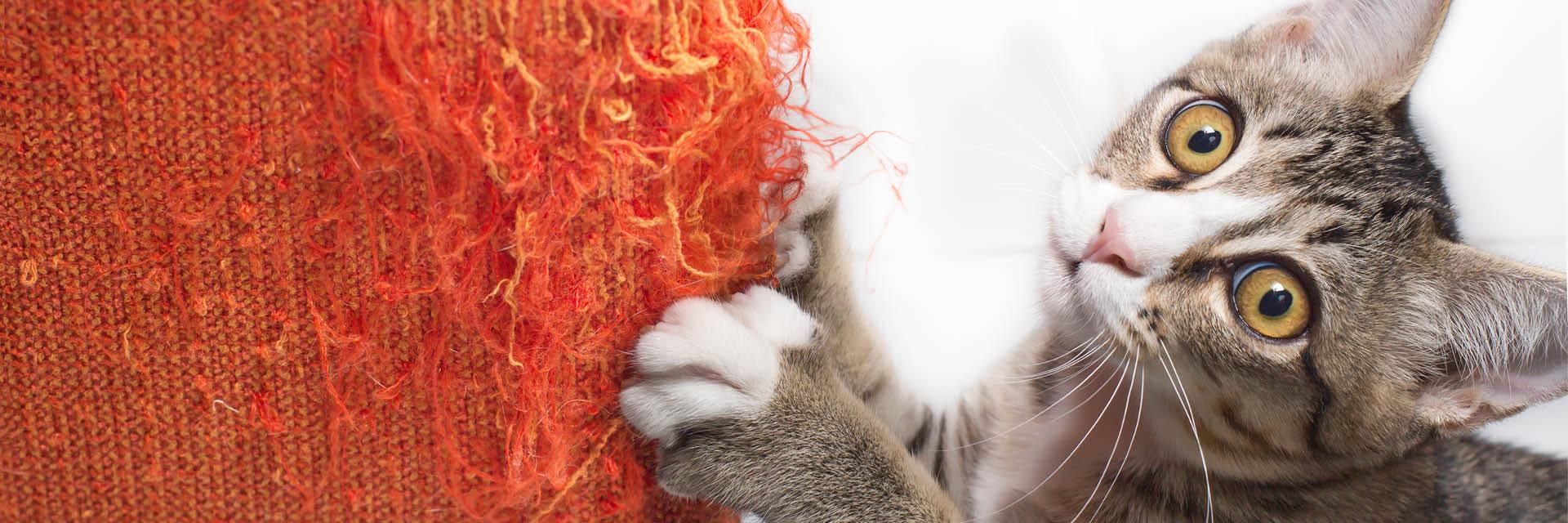 Katze, Kratzbaum