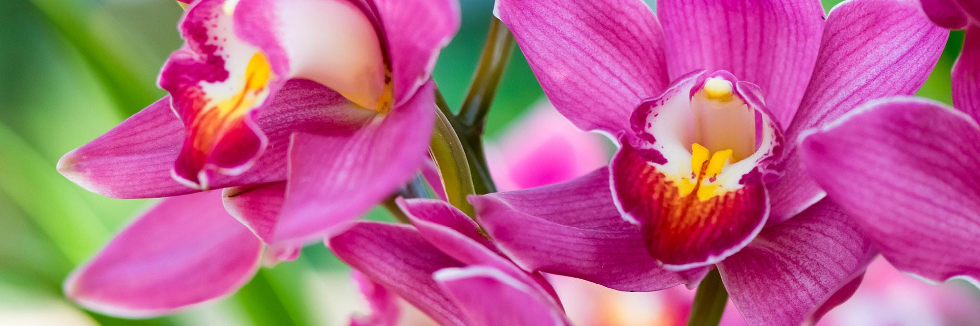 Orchideen Pflege – aber richtig! Unsere Pflegetipps